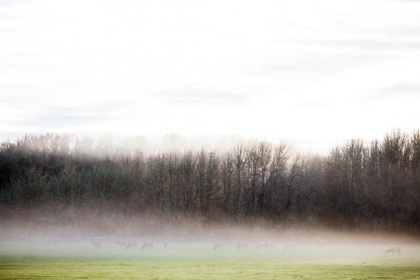Oregon_landscape_photography-1110
